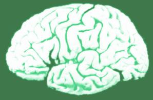 cerveau-dispo-vert